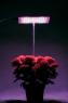 """""""Чистон - С"""" Фитосветильник для выращивания рассады и прочих растений"""